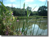 Keysham Angling Association - Century 'Old' Pond