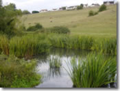 Keysham Angling Association - The River Chew - Mill Ground